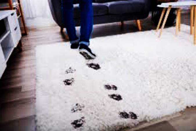 Фирми за пране на килими